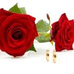 dvě růže a snubní prsteny — Stock fotografie