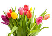 Bouquet of Dutch tulips — Stock Photo