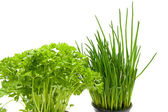 Fresh parsley and chives — Stock Photo