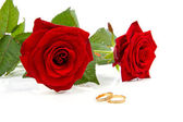 Two red roses and wedding rings — Stock Photo