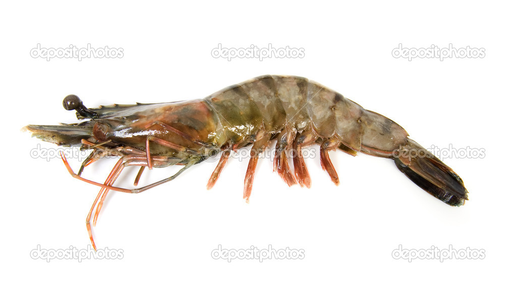 One raw shrimp — Stock Photo © sannie32 #2177376
