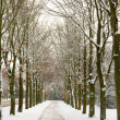 Bare trees in the winter — Stock Photo
