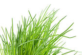 Fresh chives in closeup — Stock Photo
