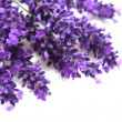 Lavender in closeup — Stock Photo