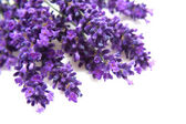 Lavendel in close-up — Stockfoto