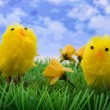 Two easter chickens on grass and flowers — Stock Photo #2433425