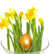 Yellow Daffodil with golden eater egg — Stock Photo