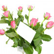 Pink roses and empty memo card — Stock Photo