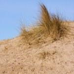 Sand dunes — Stock Photo #2666042