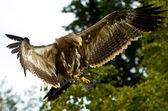 Stone eagle — Stock Photo