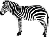 Zebra silhouette vector — Stock Vector