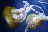 Brownsea Nettles — Stock Photo