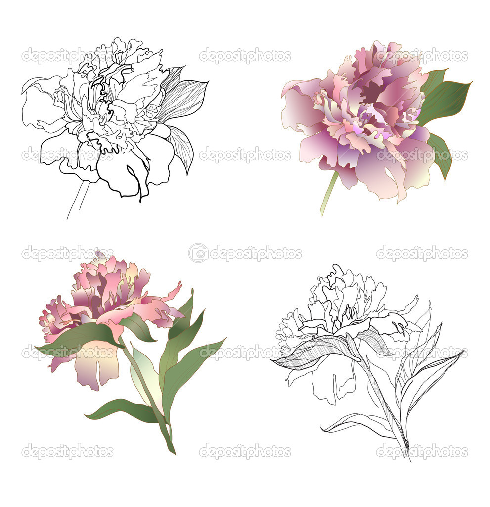 Peony black & white and coloured set — Stock Vector #2210005