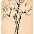 Old tree shabby paper pencil drawing — Stock Photo #2607123