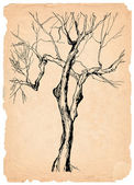 Old tree shabby paper pencil drawing — Stock Photo