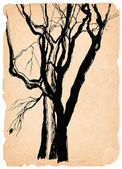 Old trees shabby paper pen drawing — Stock Photo