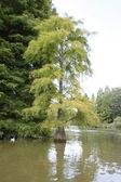 Baum im Wasser — Stock Photo