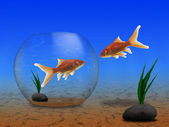 Two gold fish — Stock Photo