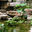 Small pond and water plants — Stock Photo