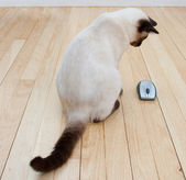 Cat and Mouse on hardwood floor — Stock Photo