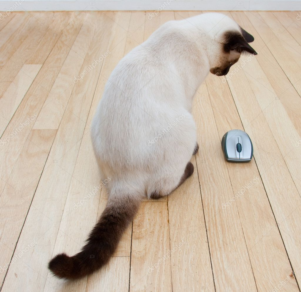 Cat and mouse on hardwood floor stock photo c npetrov for Mice in between floors