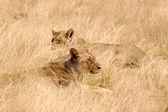 Etosha-Nationalpark, Namibia — Stock Photo