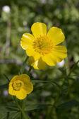 Flowering — Stock Photo