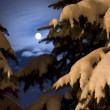 Moonlight night in wood — Stock Photo #2424856