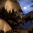 Moonlight night in wood — Stock Photo