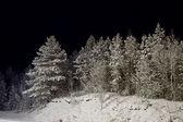 Winter wood at night — Stock Photo