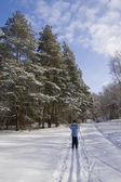 Ski walk in good winter day — Stock Photo