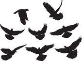 Doves vector — Stock Vector