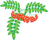 Berry vektor — Stockvektor