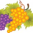 Grape vector — Stock Vector