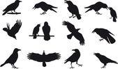 Crow vector — Stock Vector