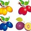 Plum vector — Stock Vector