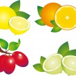 Stock Vector: Fruits vector