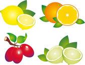 Fruits vector — Stock Vector