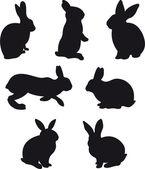 Rabbit vector — Stock Vector