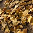Ginkgo — Stock Photo #2234290