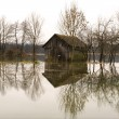 Flooded barn — Stock Photo