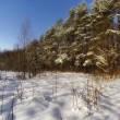 Stock Photo: Russiforest. All Seasons