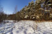 Russian forest. All Seasons — Stock Photo