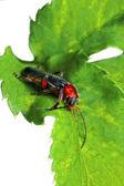 Bug — Stock Photo