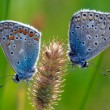 Stock Photo: Insect macro, butterfly