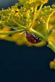 Insect macro — Stock Photo