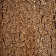 Stock Photo: Natural winter wood textures