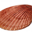 Sea shell - Stock Photo