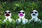 Three rubber ducks — Stock Photo