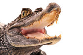 Crocodile, alligator — Stock Photo